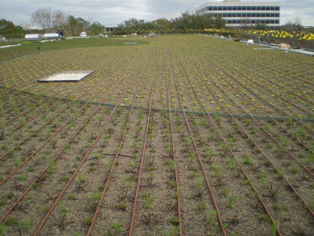 NASA Garden Roof